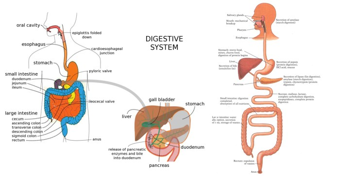 How-to-Improve-Digestion-Naturally (1)