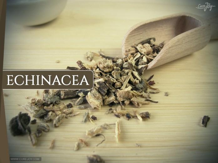 Echinacea: Best Super Foods For Thyroid Health