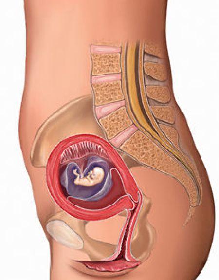 9-weeks-pregnant-fetus