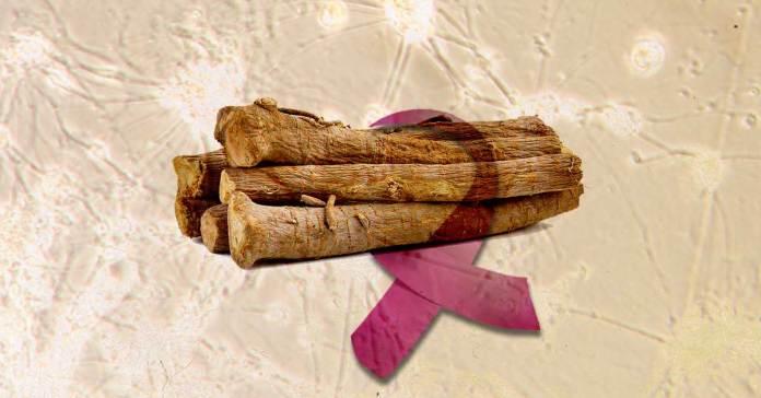 Benefits-of-Ashwagandha-for-Cancer-Treatment