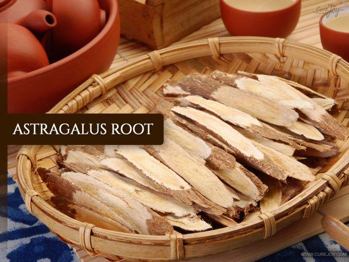.-Astragalus-Root