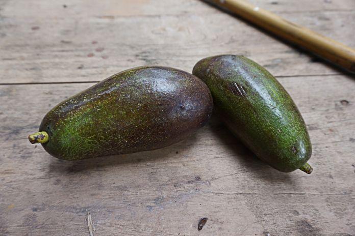 stem check to pick a ripe avocado