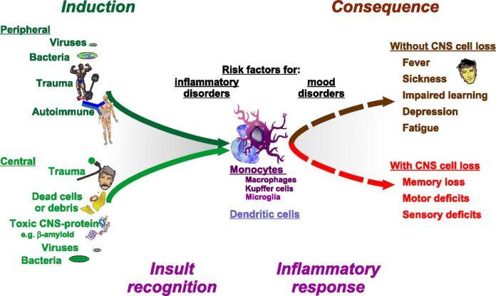 Effect Of External Factors On Immune System
