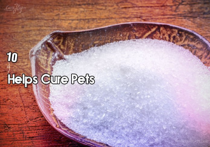 10-helps-cure-pets