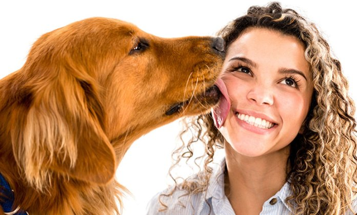 dogs communicate with us by licking