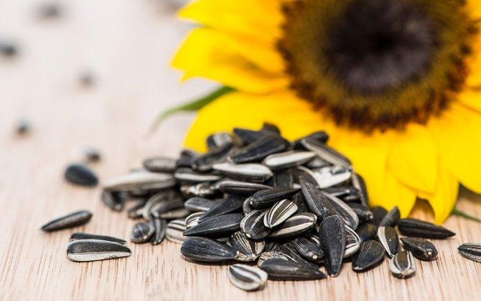 sunflower-seeds-7-12