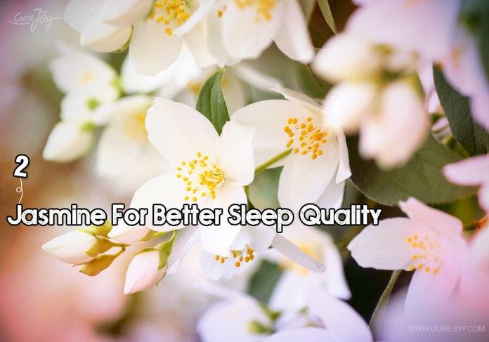 2-jasmine-for-better-sleep-quality