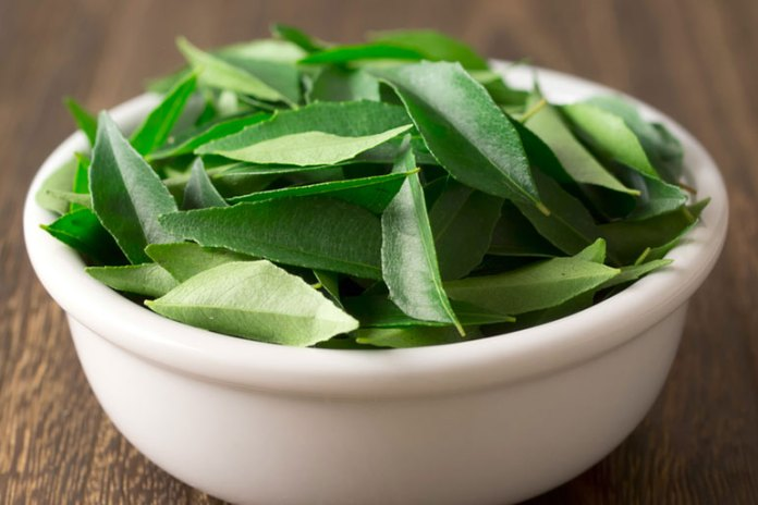 curry leaves: herbs for diabetes