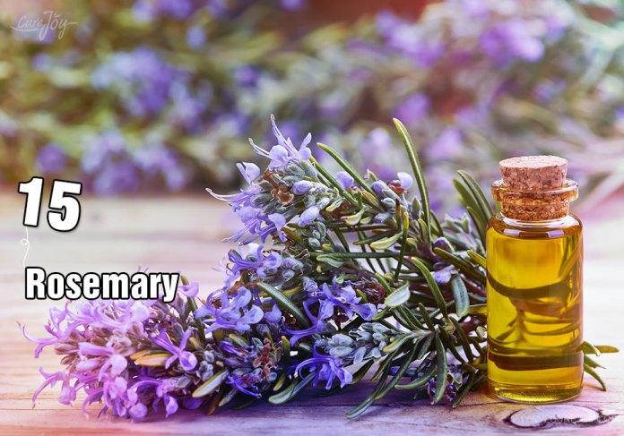 15-rosemary