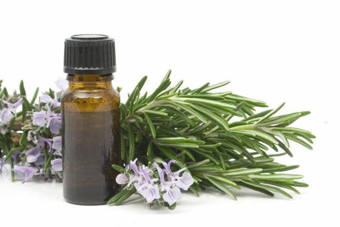 Rosemary Oil:Best Combination Oils For Avocado Oil