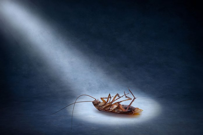 Cockroach Droppings: 9 Most Common Asthma Triggers