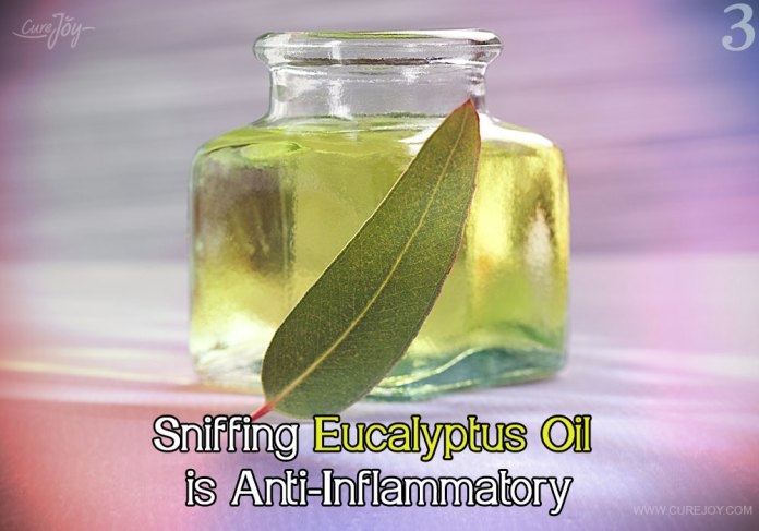 3-sniffing-eucalyptus-oil-is-anti-inflammatory