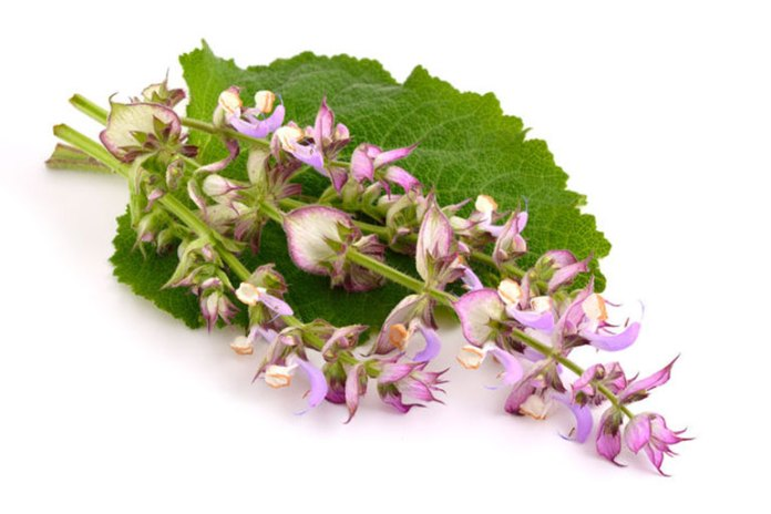 Clary sage may also enhance cognitive function.