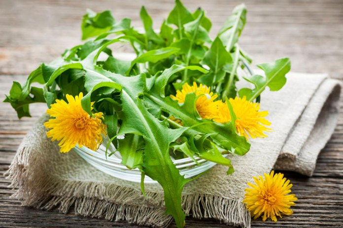 dandelion leaves help dissolve kidney stones