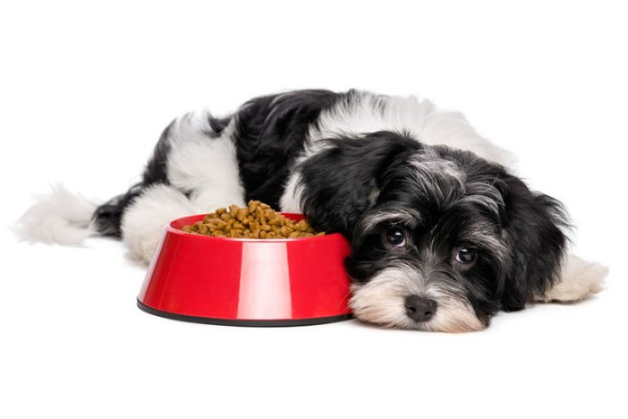 Dog might eat less when in pain