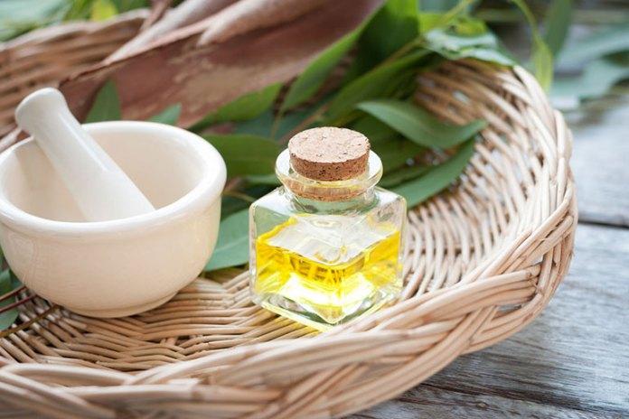Essential Oils For Babies: Eucalyptus Oil
