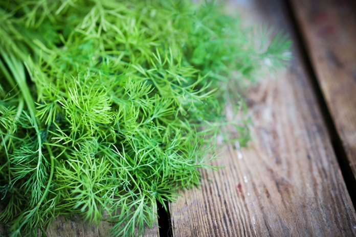 7 Essential Oils For Babies: Dill