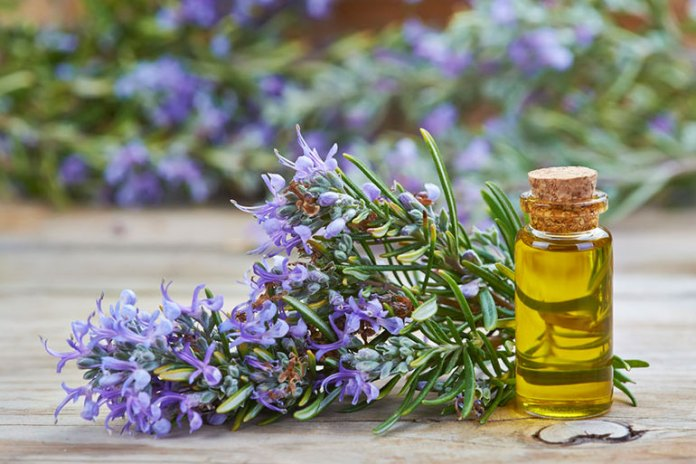 Rosemary Essential Oils For Inflammation