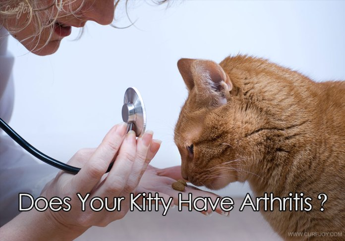 1-does-your-kitty-have-arthritis