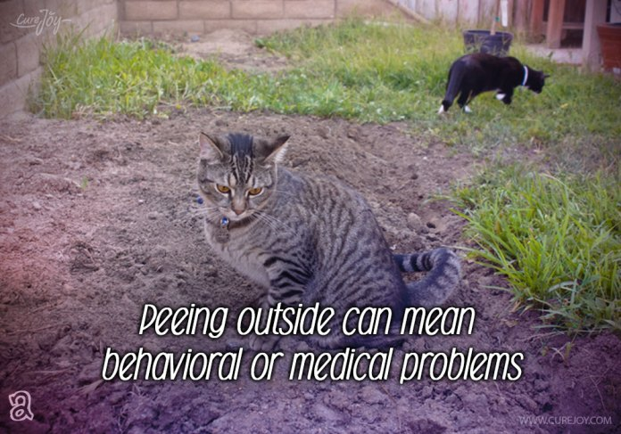 2-peeing-outside-can-mean-behavioral-or-medical-problems