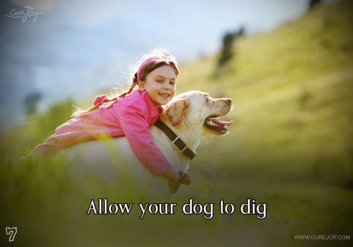 7-allow-your-dog-to-dig