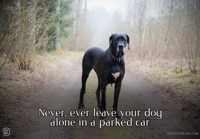 9-never-ever-leave-your-dog