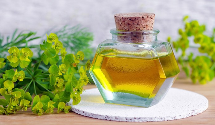 Cypress Essential Oil That Reduce Cellulite Naturally