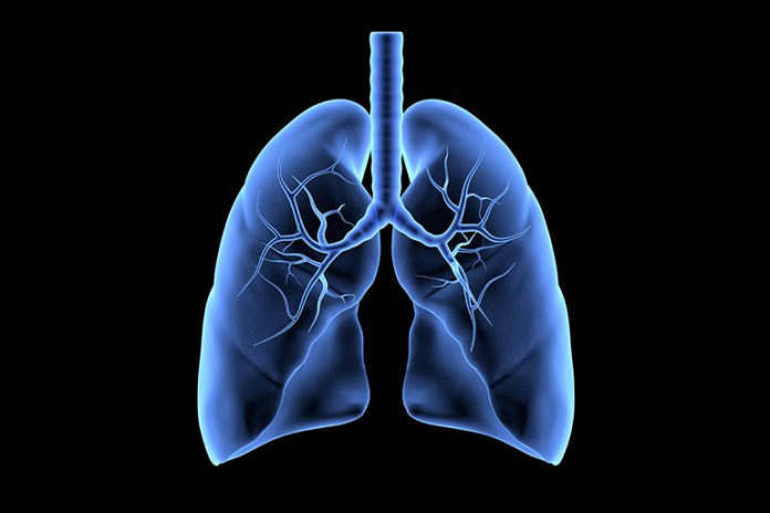 Decongests Lungs