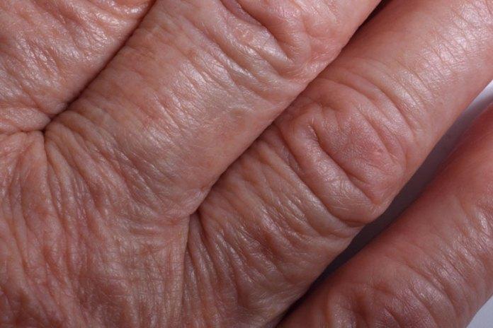 Health Benefits Of Green Vegetables: Prevent Cellular Aging