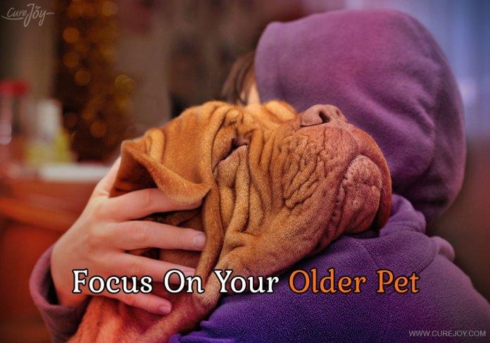 1-focus-on-your-older-pet