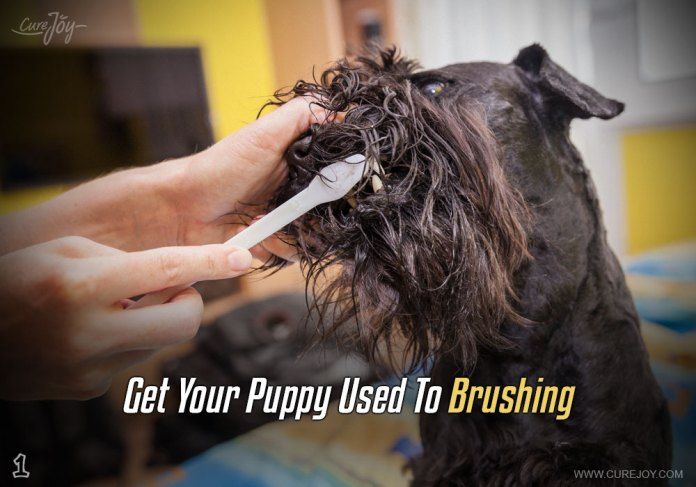 1-get-your-puppy-used-to-brushing