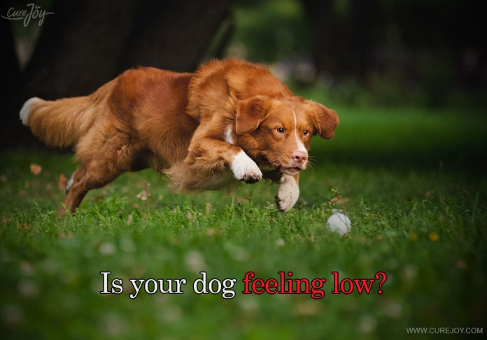 1-is-your-dog-feeling-low