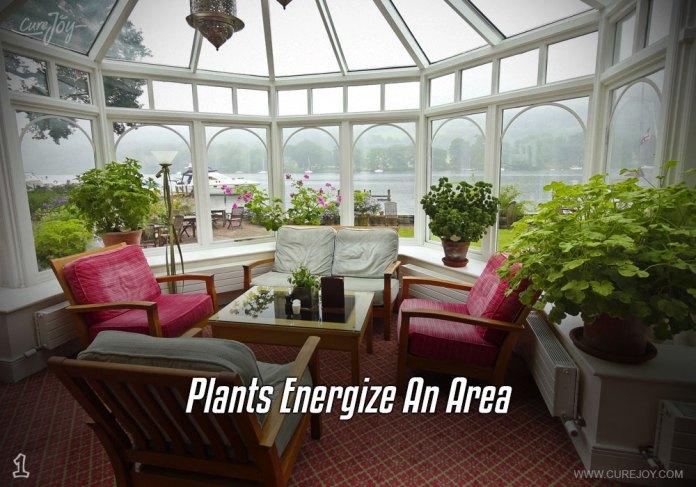 1-plants-energize-an-area