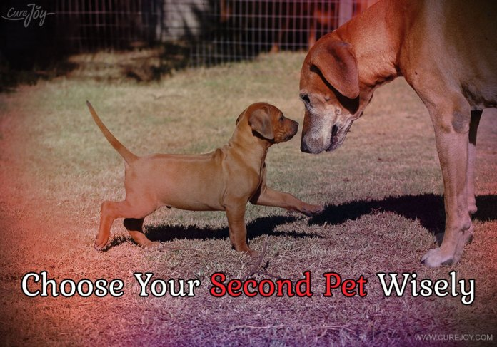 2-choose-your-second-pet-wisely
