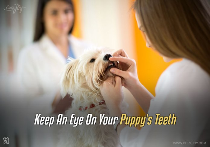 2-keep-an-eye-on-your-puppys-teeth