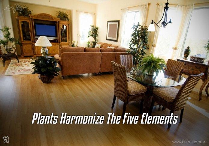 2-plants-harmonize-the-five-elements