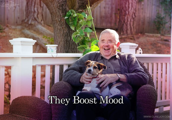 2-they-boost-mood