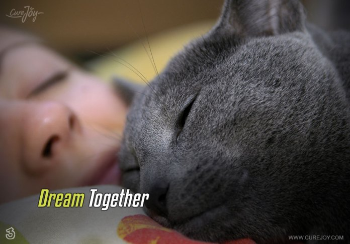 3-dream-together
