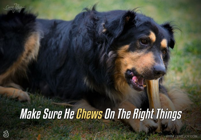 3-make-sure-he-chews-on-the-right-things