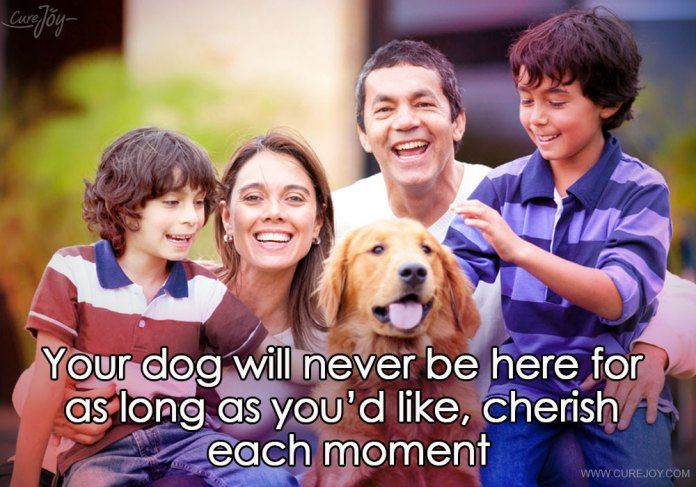 3-your-dog-will-never-be-here-for-as-long-as-youd-like-cherish-each-moment