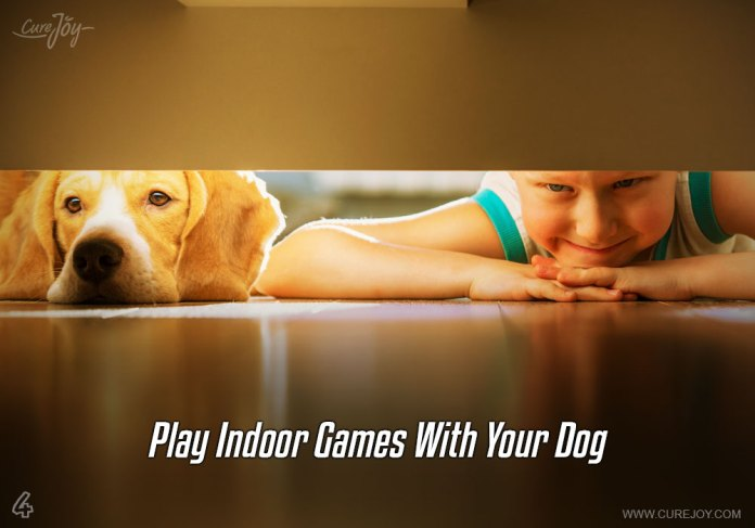 4-play-indoor-games-with-your-dog