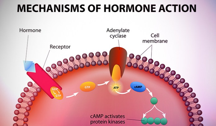 Coconut Oil Balances Hormones