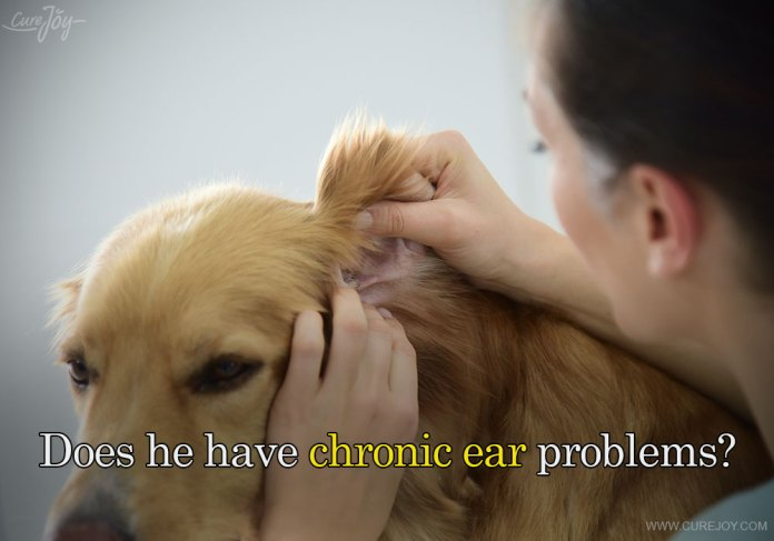 6-does-he-have-chronic-ear-problems
