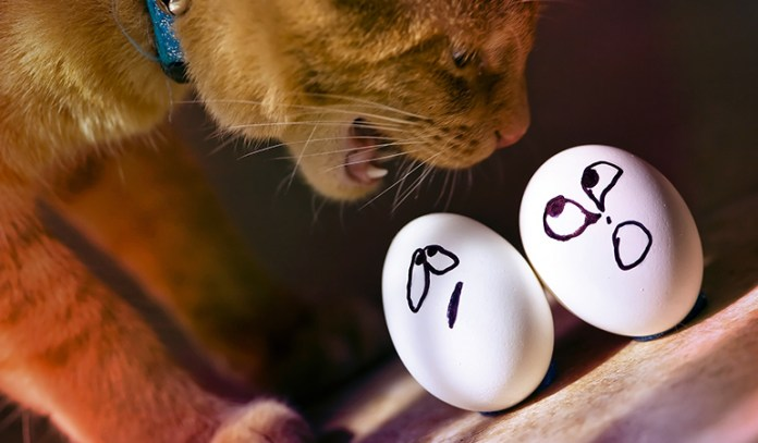 6-eggs