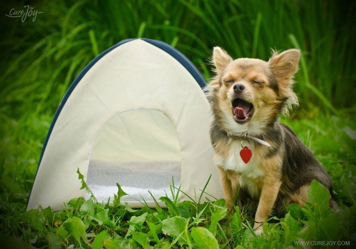 6-pet-friendly-fitness-camp