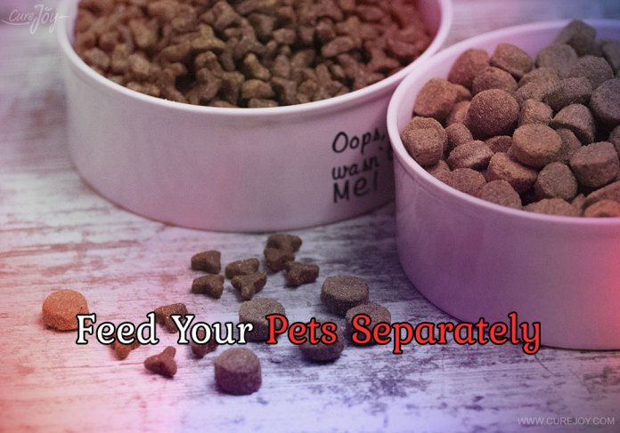 7-feed-your-pets-separately
