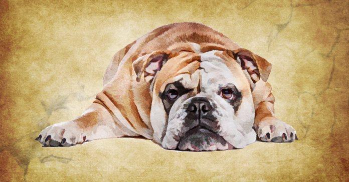 symptoms of dehydration in dogs