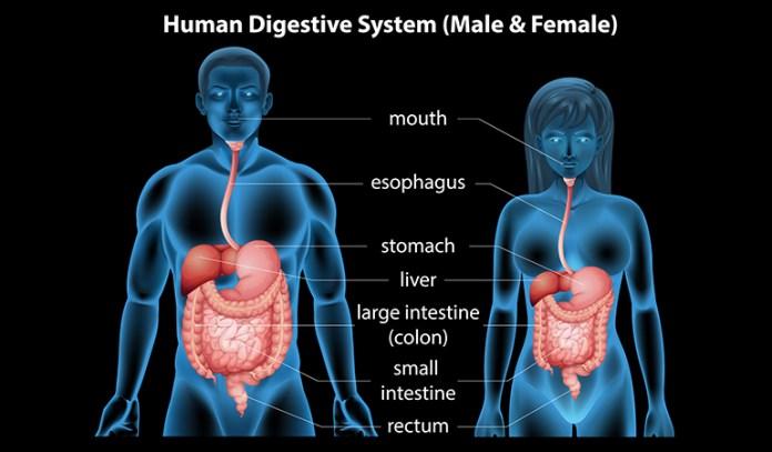 Sarpagandha Aids Digestion