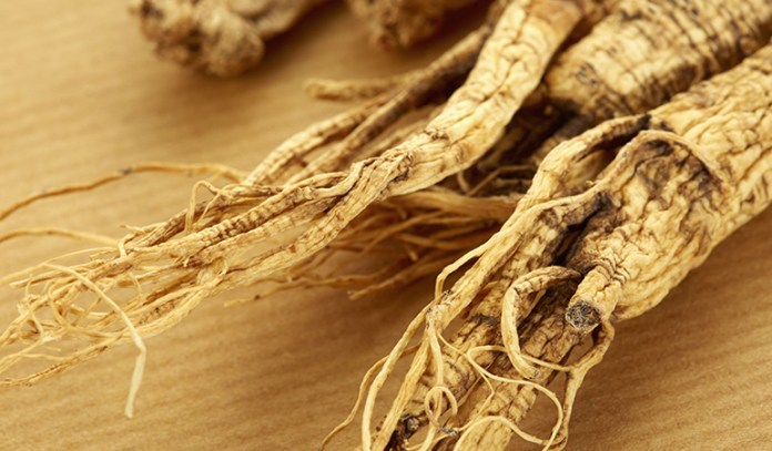 American ginseng helps prevent high blood pressure and type 2 diabetics
