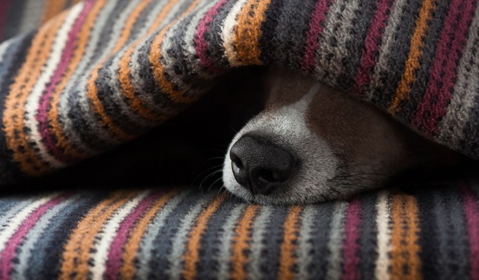 symptoms of dehydration in dogs Dry Nose
